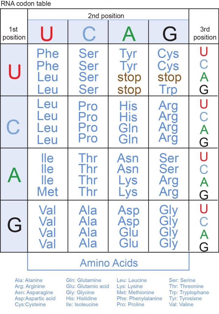 Dna Protein Chart Proteinwalls