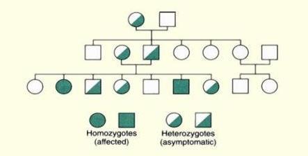 pedigree how to show heterozygous carrier